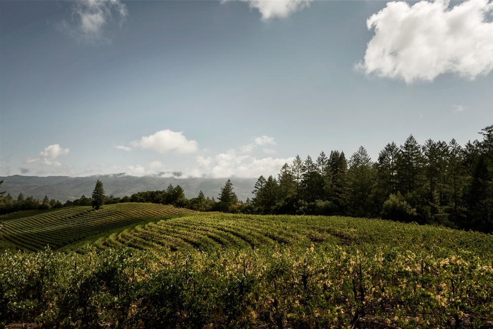 Jack London Vineyard.jpg
