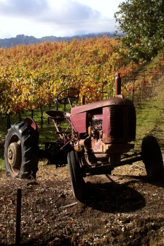 LittleVineyards famous tractor.JPG