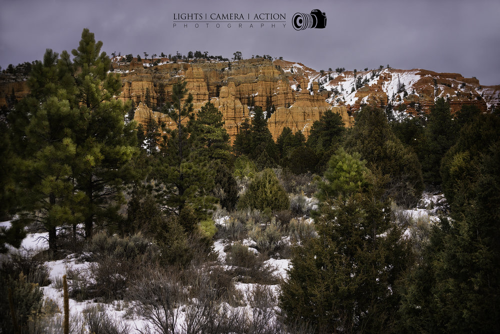 The flora of Bryce
