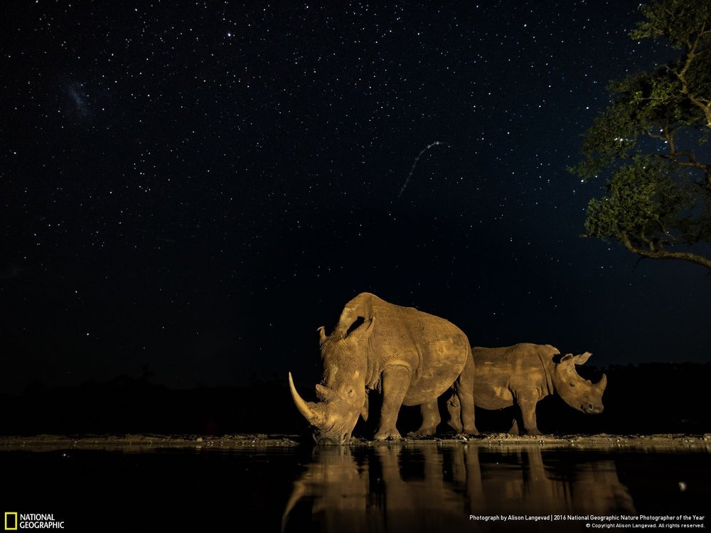 Priceless by Alison Langevad: Two very precious endangered beasts gracing me with their presence under the stars in South Africa. So many of these rhino are now being dehorned to save them from poachers that this photographic moment is even more precious to me. A long exposure for the stars while light painting the rhino as they drank makes for an amazing moment captured.