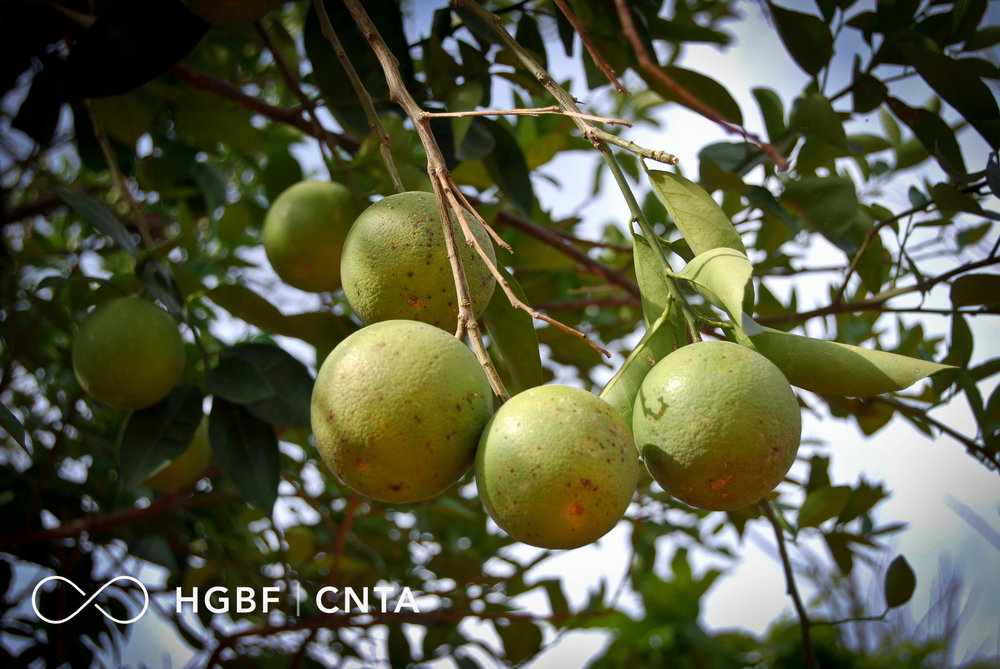 CNTA_Crops_Brand-3.jpg