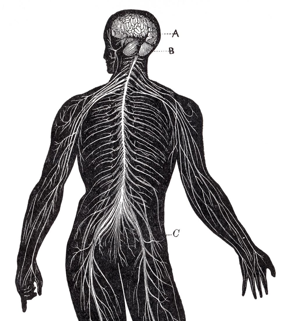 stockvault-human-nervous-system-circa-1911148445.jpg