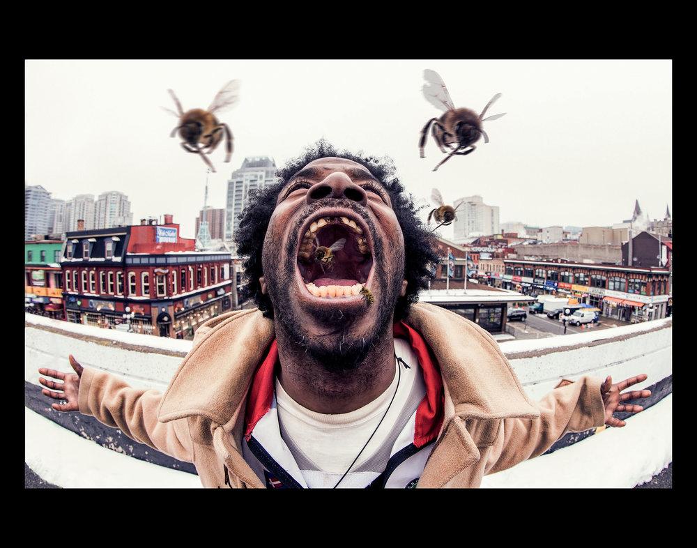 killer-bees.jpg