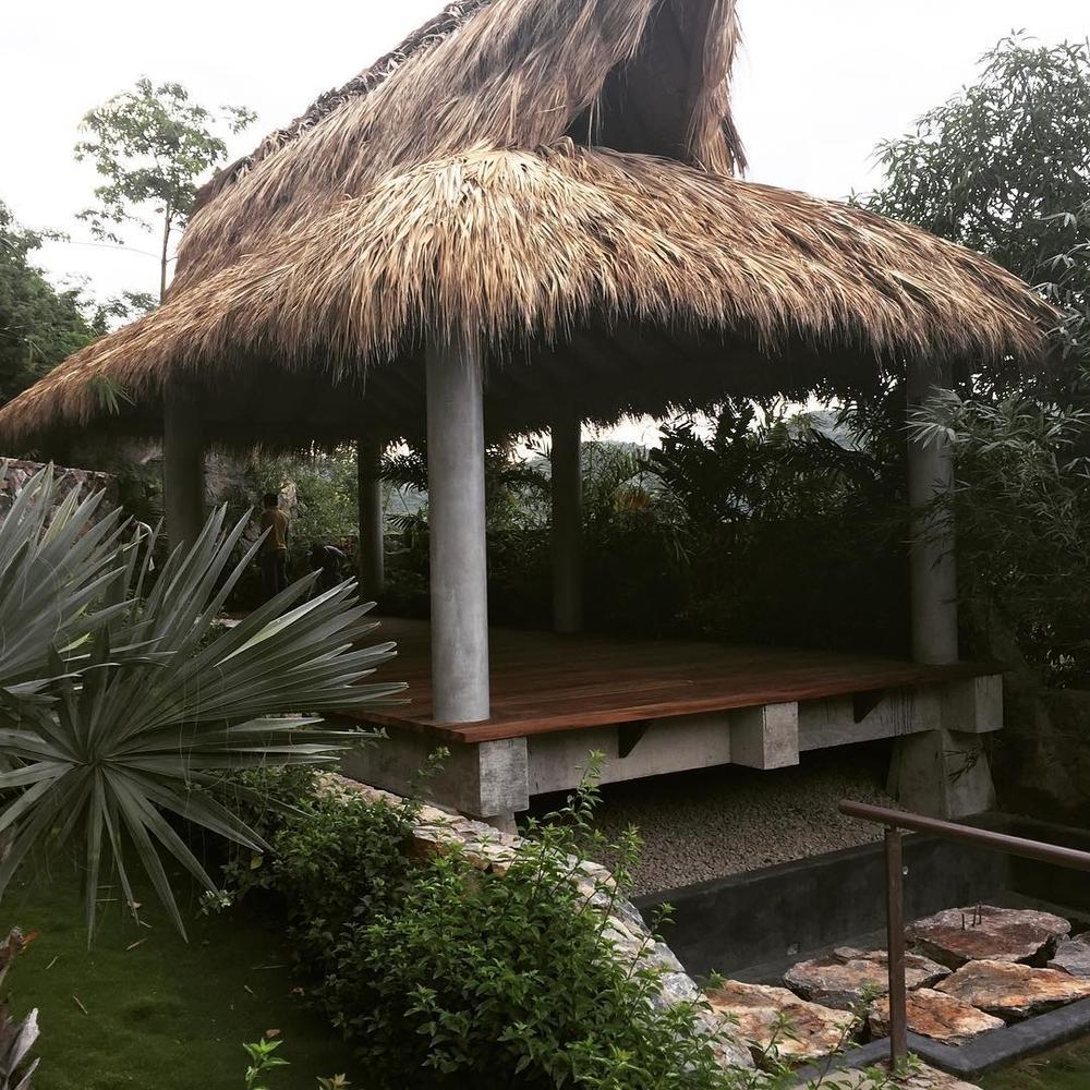 palmera palmera.jpg