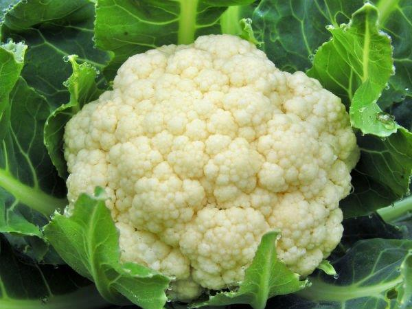 cauliflower[1].jpg