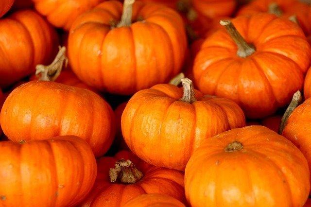 pumpkins1[1].jpg