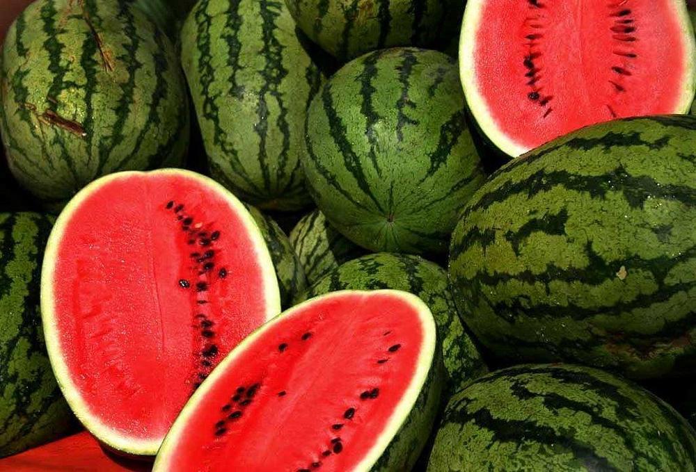 Watermelons[1].jpg