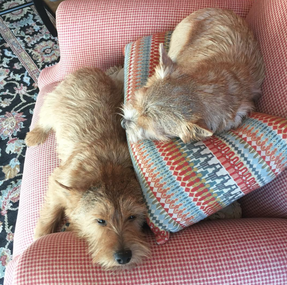 A photo of my two favorite dogs sitting on a chair together