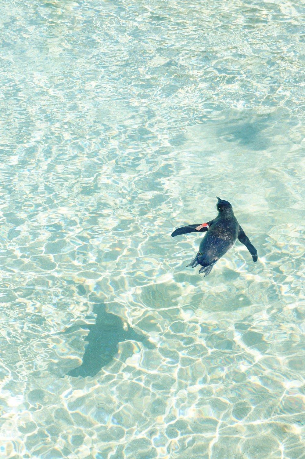 Penguin 02.JPG