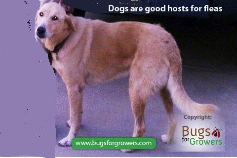 Photo 1. Dog as host of fleas