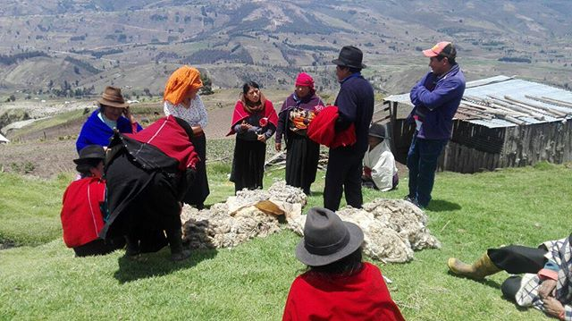 Sometimes we need more wool and we look for it in other indigenous communities. We knit more than fiber, we bring communities together! #andesmaterials #andes #wool #handmade #socialenterprise #socialinnovation #ecuador #