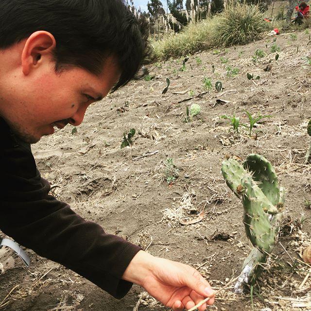 Para Andes Materials es importante la salud de la gente y de la naturaleza. Es por eso que trabajamos con el Biologo @cisnerosheredia en el cuidado del impacto del uso de recursos animales y vegetales de nuestros productos textiles. #andes #textile #life #whomademyclothes #sustainablefashion #fashion #biology #pigments #cochineal #trend #organic