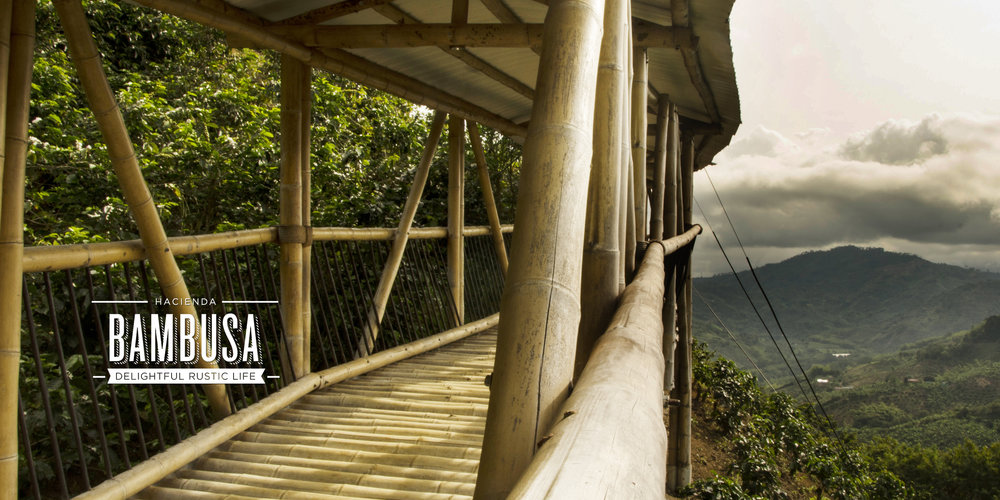 Bambusa Web Images8.jpg