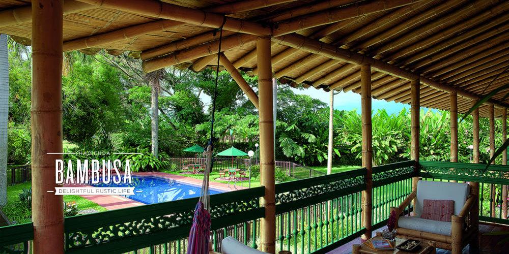 Bambusa Web Images11.jpg