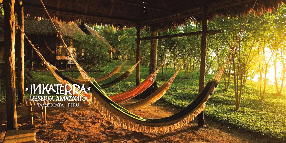 IT Amazonica 1.jpg