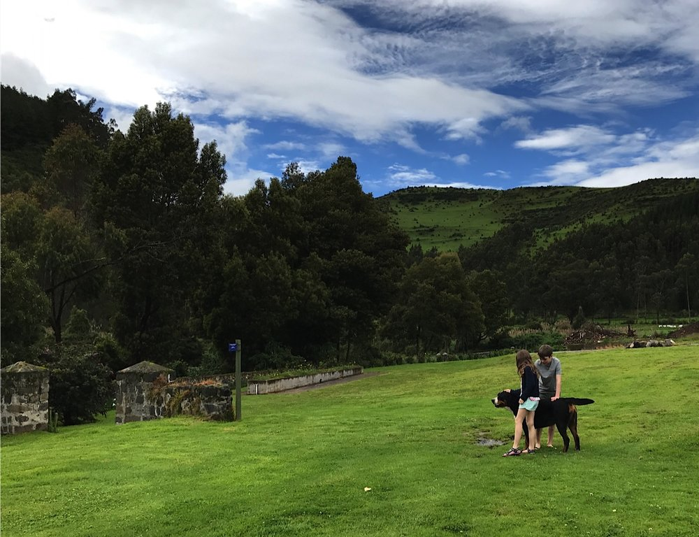 "Canine companion ""Mambo"" - perfect guide for exploring the grounds at Hacienda Zuleta"