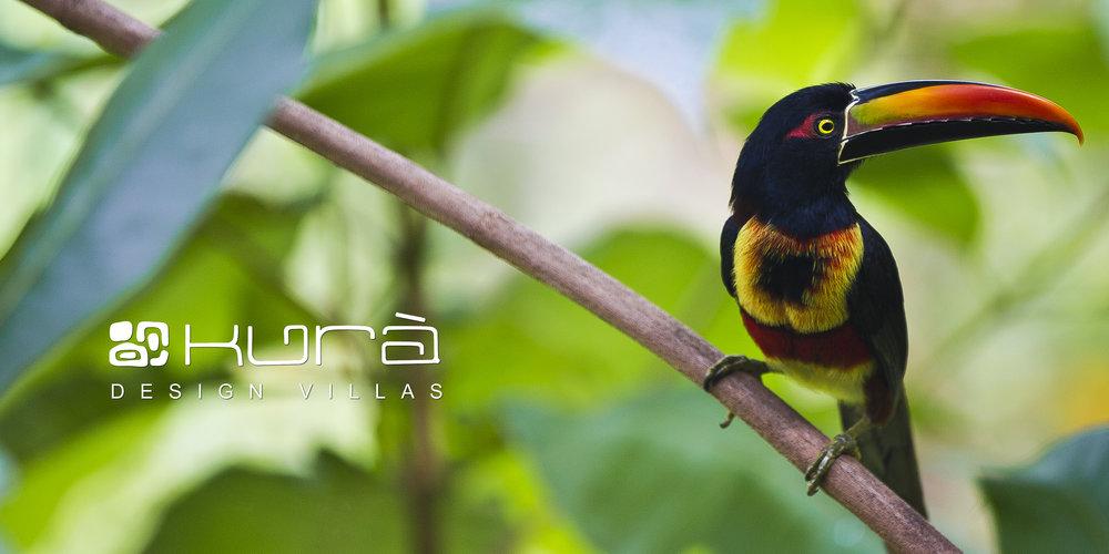 Kura Web Images 9.jpg