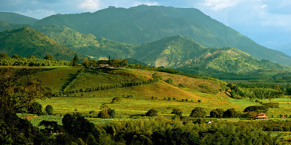 Bambusa Landscapes (11).jpg