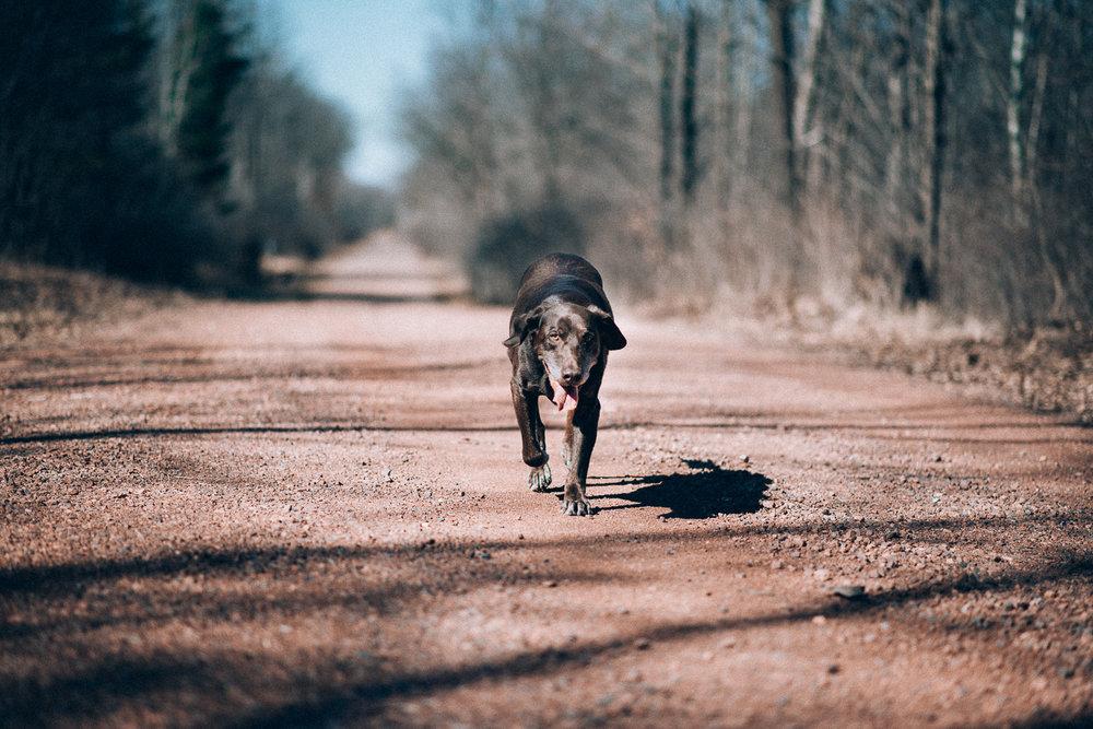 Wisconsin-Pet-Photographer-1.jpg
