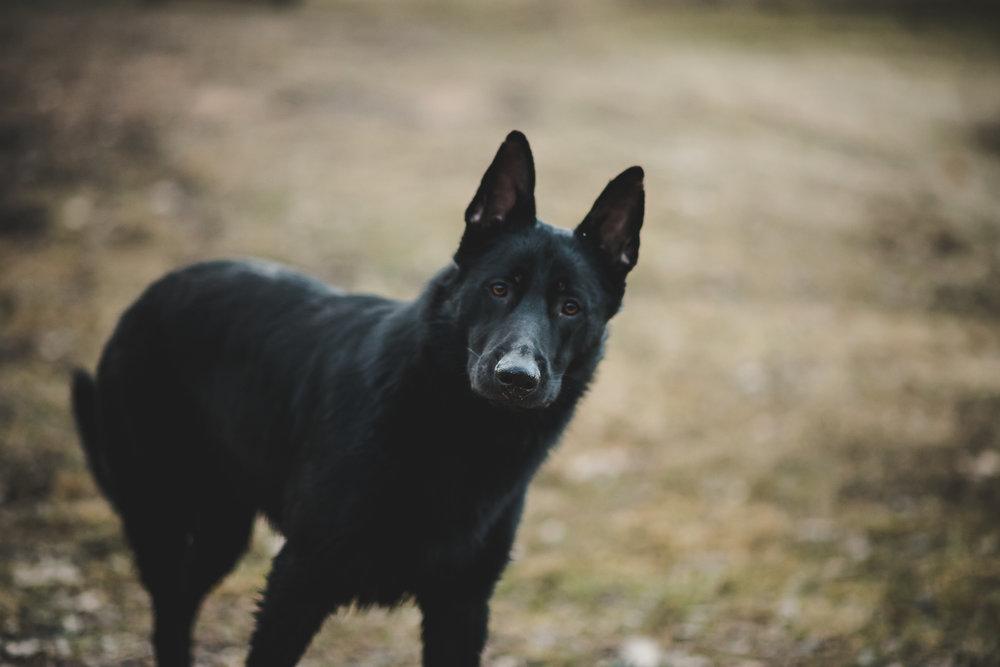 Wisconsin-Pet-Photographer-2.jpg