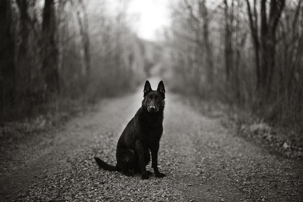 Wisconsin-Pet-Photographer-3.jpg