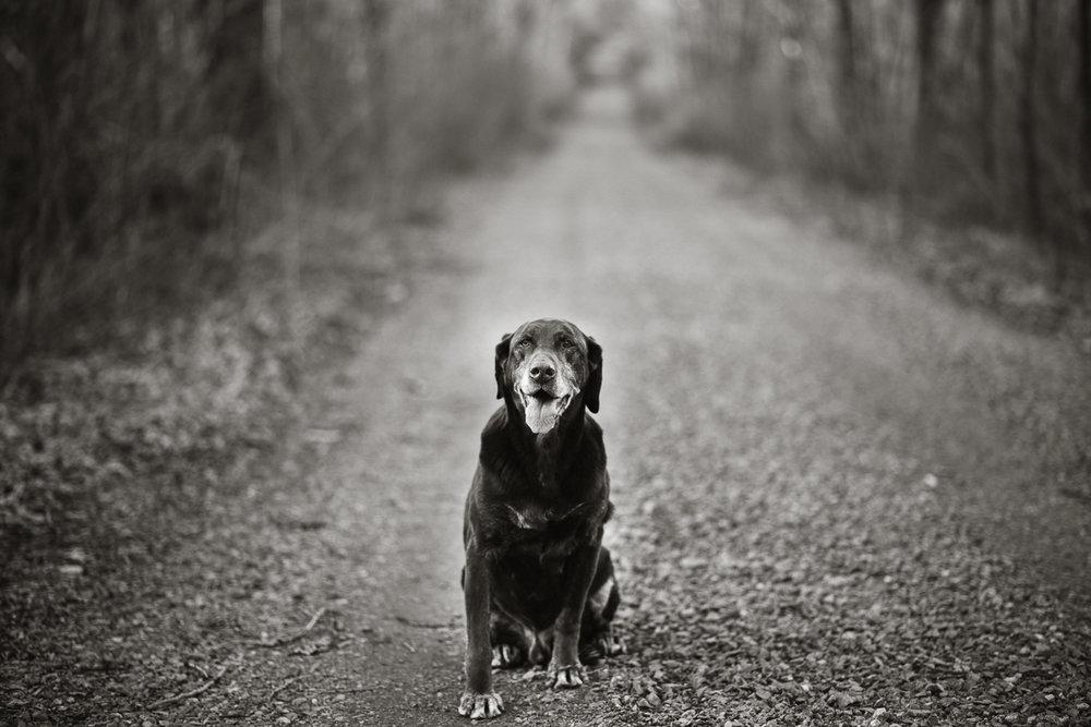 Wisconsin-Pet-Photographer-5.jpg