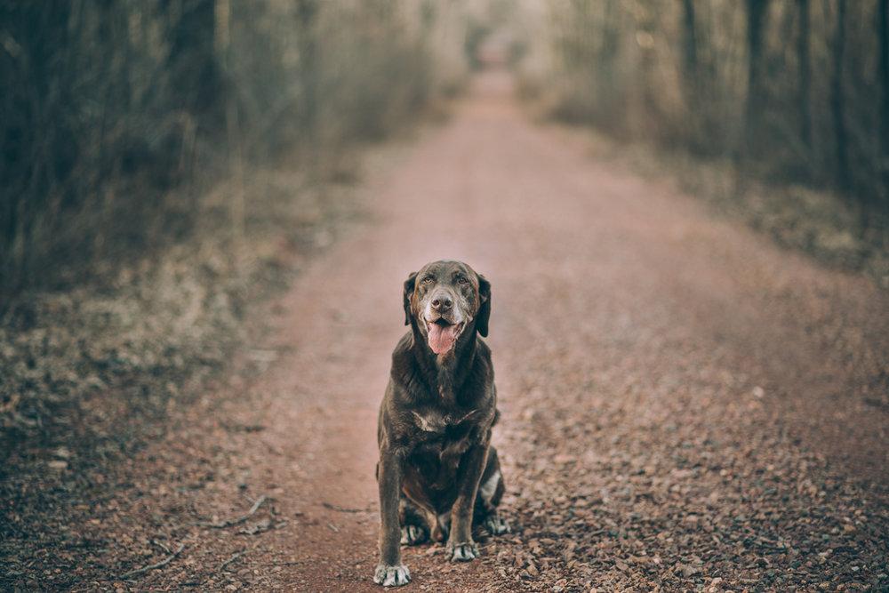 Wisconsin-Pet-Photographer-6.jpg