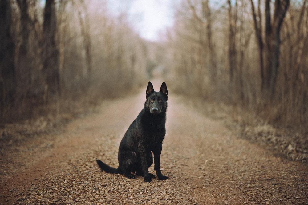Wisconsin-Pet-Photographer-4.jpg