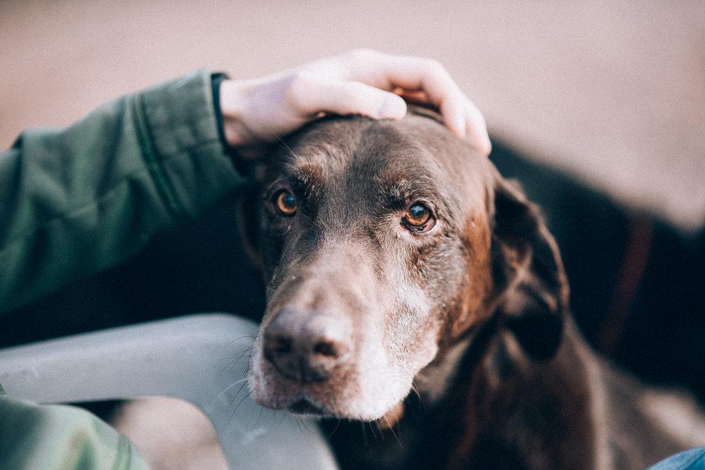 Wisconsin-Pet-Photographer-10.jpg