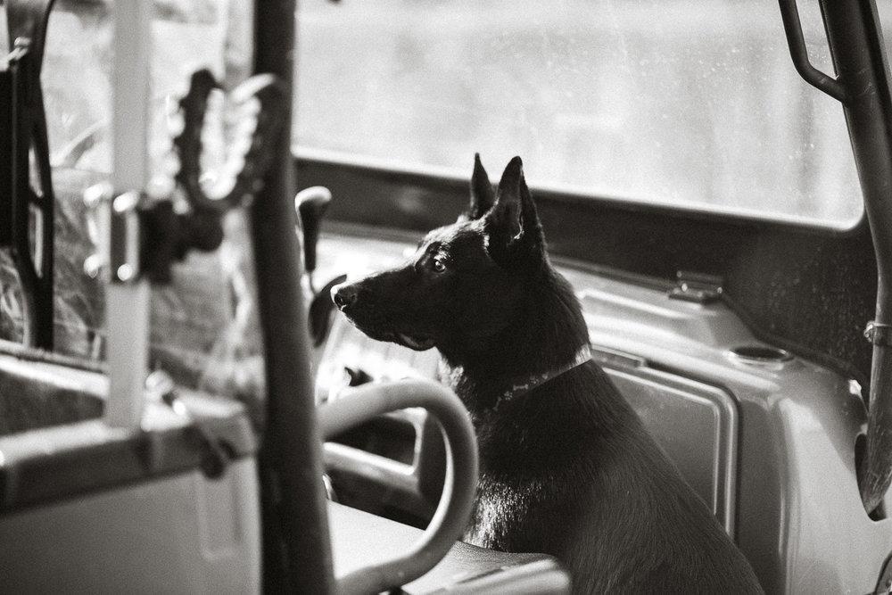 Wisconsin-Pet-Photographer-11.jpg