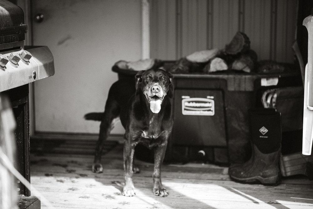 Wisconsin-Pet-Photographer-13.jpg
