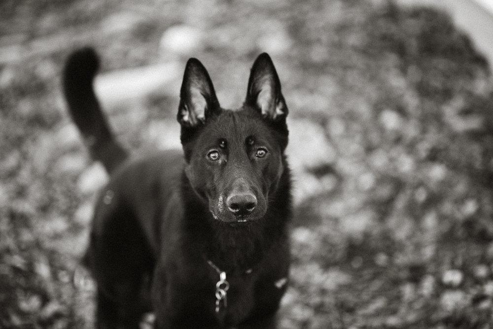 Wisconsin-Pet-Photographer-17.jpg