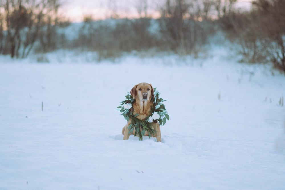 Wisconsin-Pet-Photographer-24.jpg