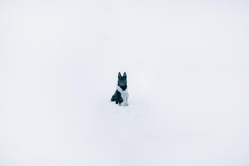 Wisconsin-Pet-Photographer-27.jpg