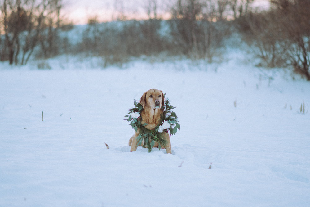 Wisconsin-Pet-Photographer-26.jpg