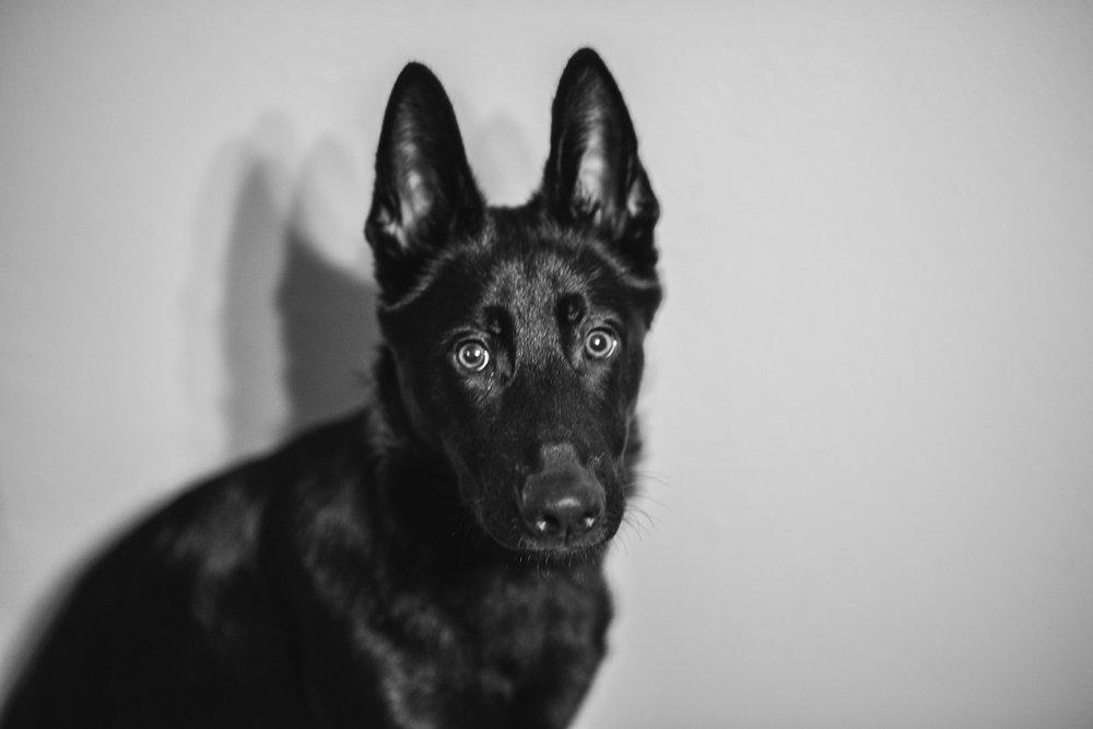 Wisconsin-Pet-Photographer-30.jpg