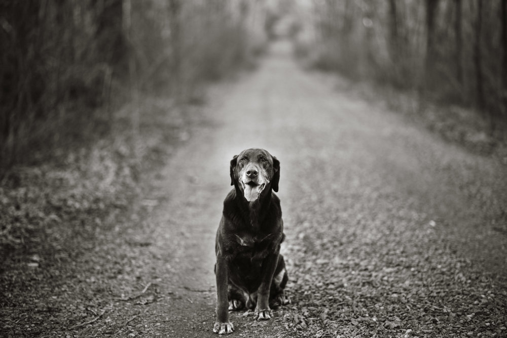Wisconsin-Photographer-21.jpg