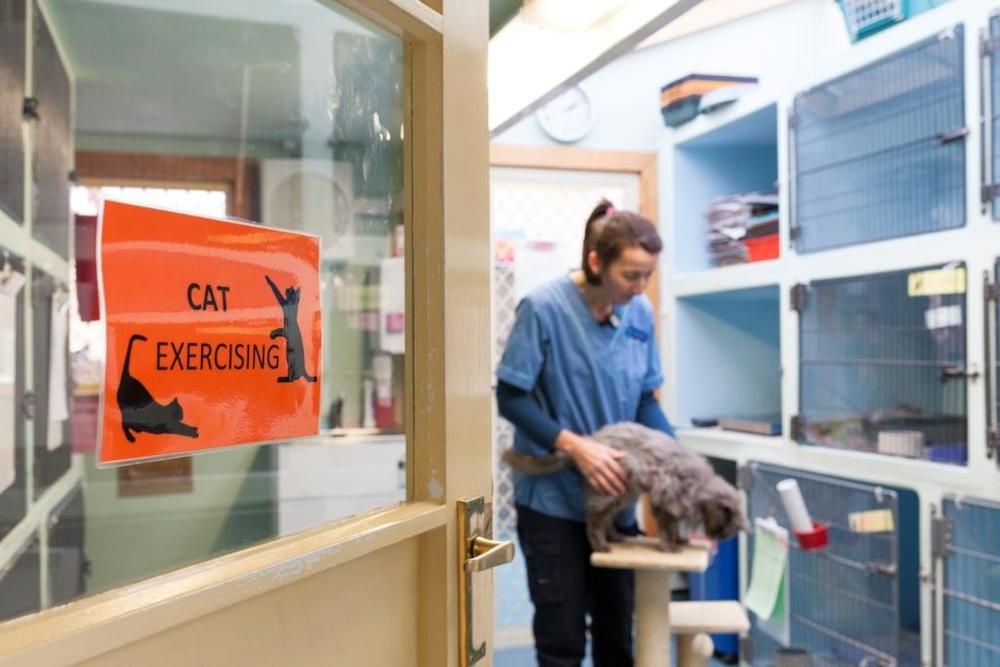 Separate cat ward