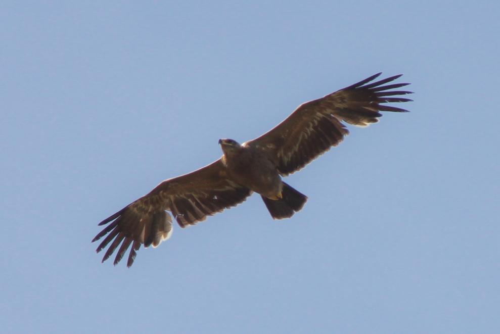 BIRDWAVE  Aktivera din lugn o ro säl i närmiljö, skåda fågel på noga utvalda platser med fantastisk natur och oftast med inhemska guider. Allt till en rimlig kostnad och upplevelser för livet.  Läs mer >>