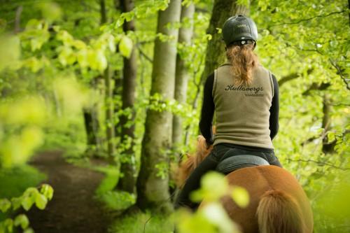 KULLABERG ISLANDSHÄST  Under de höga bokarna strax intill Kullabergs vackra naturreservat bor familjen Barner/Carlsson och deras djur och erbjuder träning, undervisning och uteritter i vacker natur på välutbildade pigga hästar.  Läs mer >>