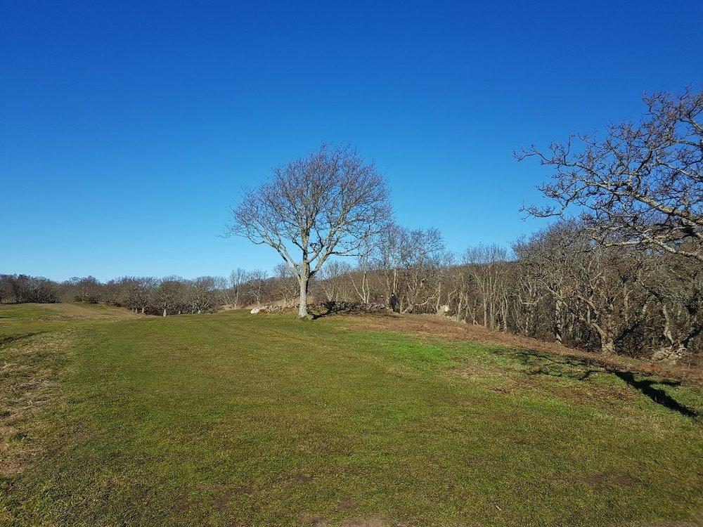Fotot nedan visar hur 8:ans green äntligen är fylld av solljus på grund av det stora trädfällningsarbete som genomförts runt greenen. Detta innebär även att luftrörelserna kommer att ökas runt greenområdet vilket i sin tur bidrar ännu mer till en gynnsam och sund gräsväxt. Och vilken fantastisk vy detta arbete har bidragit till - helt plötsligt kan du se hela vägen ner mot 10:ans tee!