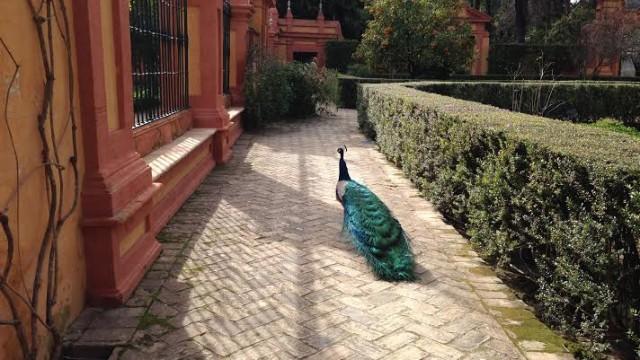A Return to Seville