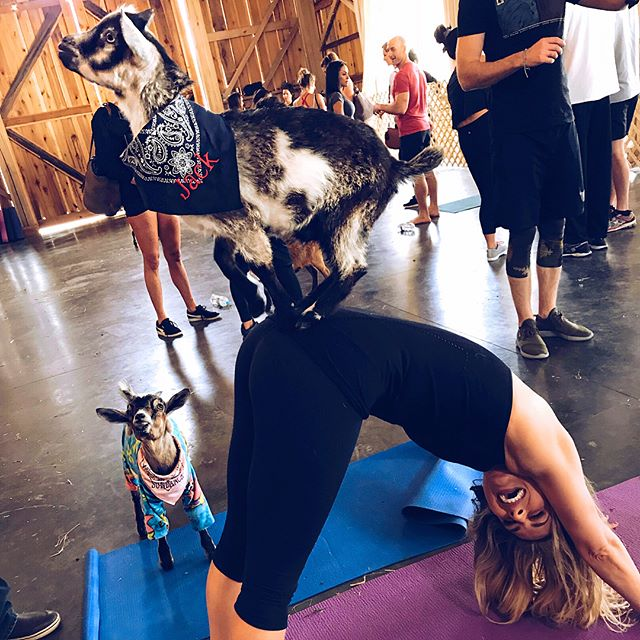 Goat Yoga w the crew today (missing @amanda.satcher & @billsatcher). And Michael and I have a Kid now!!!! SWIPE RIGHT to see our child 😍🐐 _____  @theoldschoolnashville @shenanigoatsyoga @michaelhobby @ae_deloach @rhainbrown @grahamdeloachparty @therealzachbrown