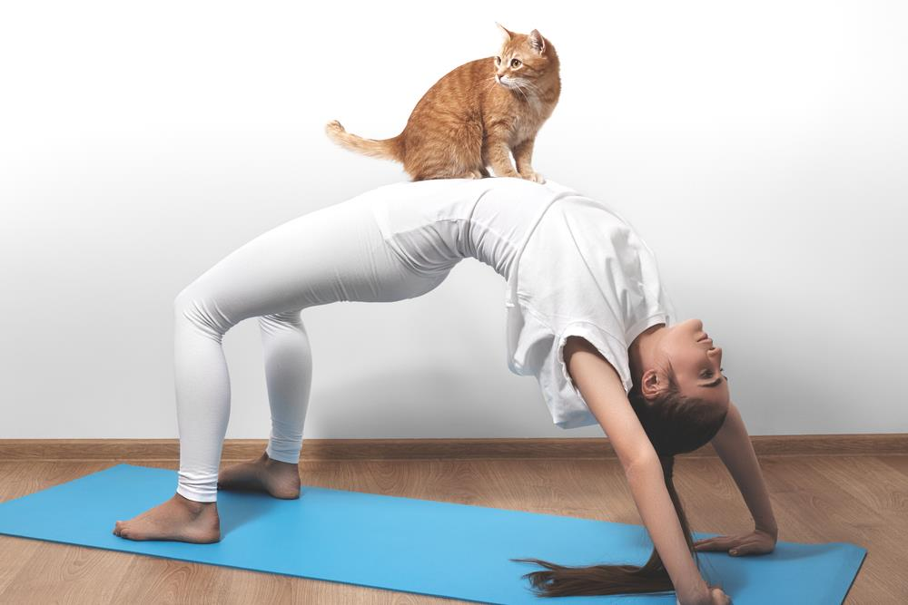 Cats - great for cuddles. Somehwhat unreiable as yoga props