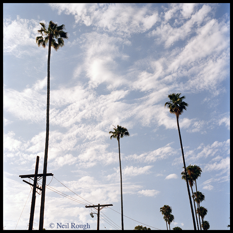 01. CA Hollywood Palms.jpg