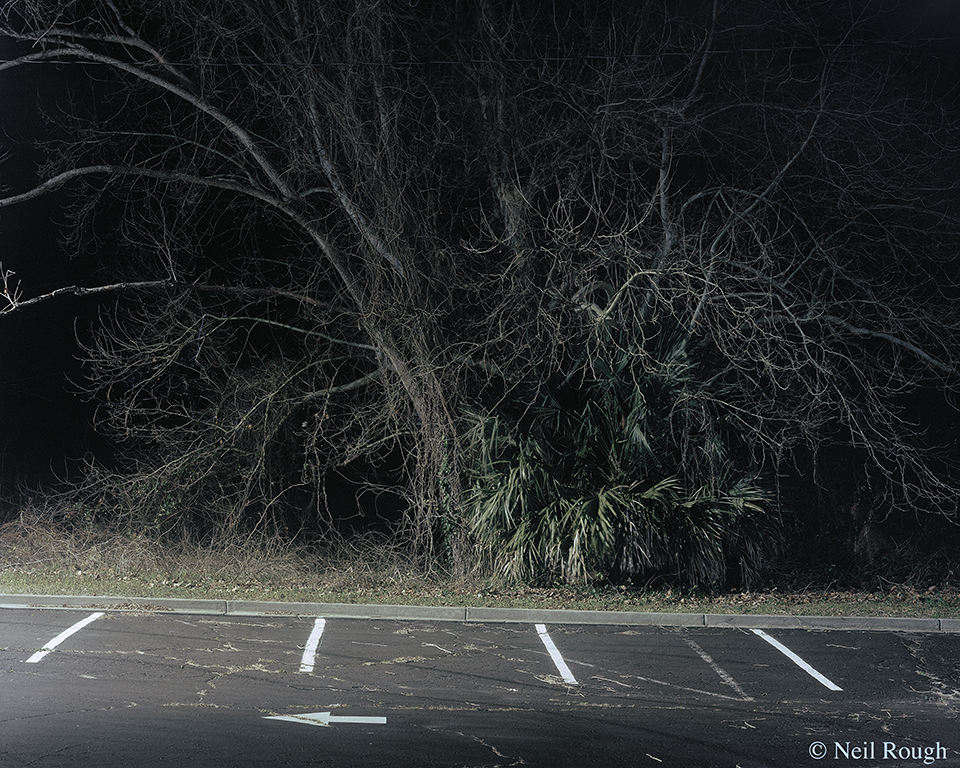 Myrtle Beach Parking Lot Tree 2015.jpg