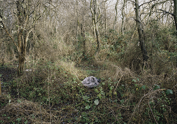 from the / aus der /  La Jungle Serie / Series / 2009 / 2010 / Copyright Mathieu Pernot