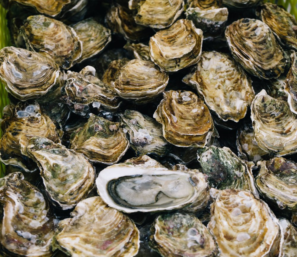 OYSTER RAW BAR - Daily Fresh East/West Coast Oysters $1.25 Each 3 to 6 pm Mon-Sat.