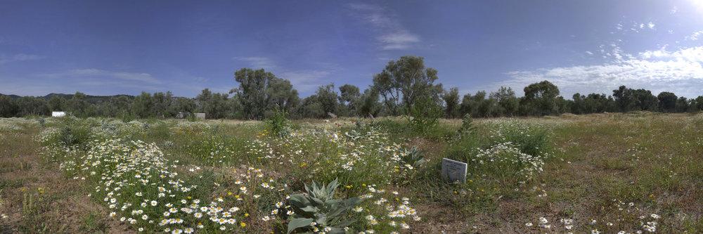 Grabstein auf einem Gräberfeld auf Lesbos