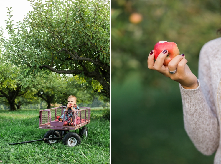 Pick n' Save Medina Apple Orchard Family Photos